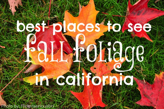 Best Places To See California Fall Foliage