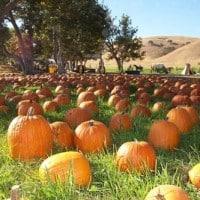 Pumpkin_20View
