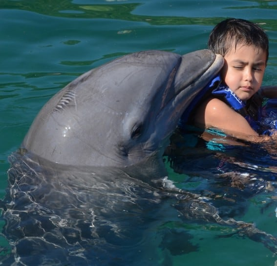 dolphin encounters for kids Riveria Maya