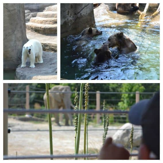 Kid friendly Cleveland: Cleveland Metroparks Zoo
