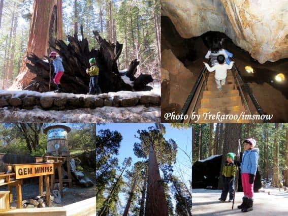 Mercer Caverns, Big Tree State Park