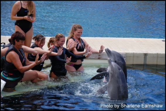 Dolphin Quest Hilton Waikoloa Village: Kid Friendly Big Island Lodging