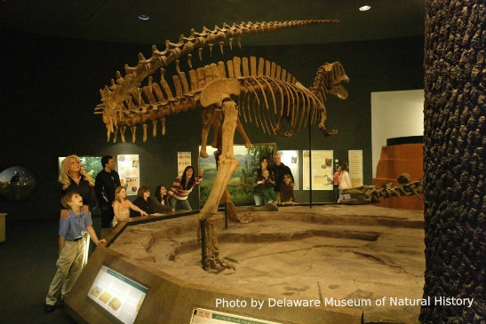 Delaware Natural History Museum kid-friendly