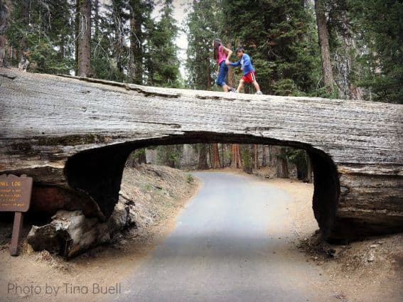 Three National Parks in Three Days: Tunnel Tree Sequoia National Park Photo by: Tina Buell