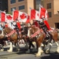 Calgary Stampede Photo by: Flickr/Danteling