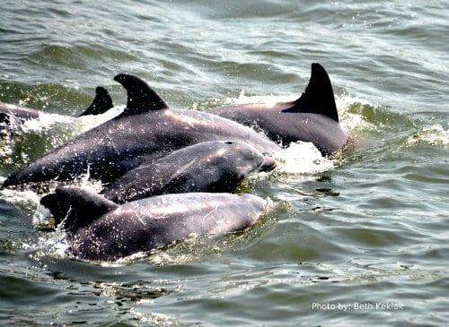 The Jersey Cape: 6 Family Friendly Activities: family friendly activity, dolphin watch cruise Photo by: Trekaroo/Beth Keklak