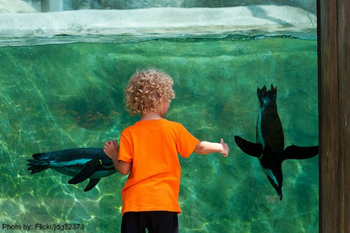 Top 10 Things for Families to Do in Arkansas: Little Rock Zoo Photo by: Flickr/jdg32373
