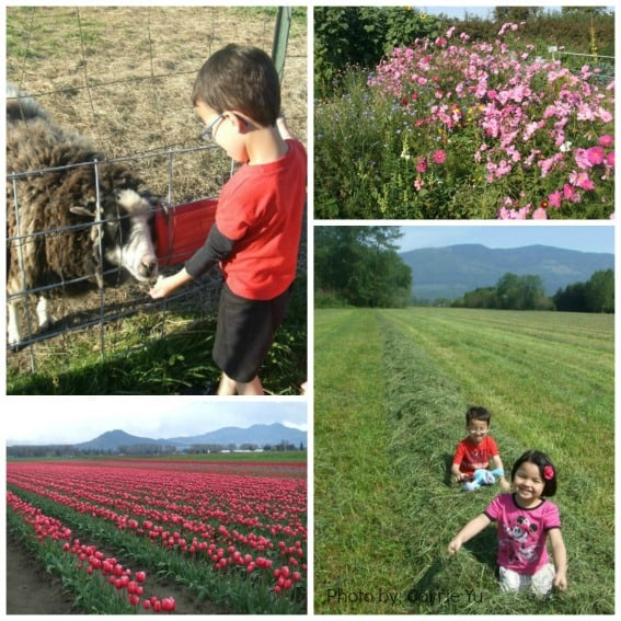 Top 10 Things for Familes to do in Washington State: Washington Farms with Kids Photo by: Carrie Yu