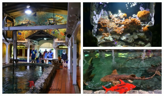 Key West Aquarium Shark