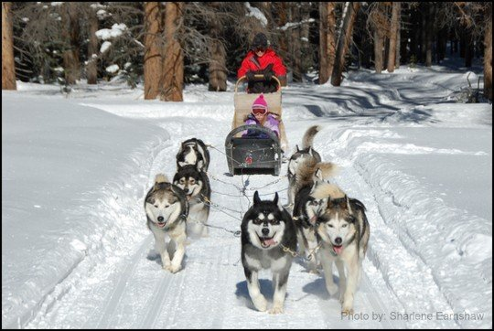 Best Dog Sledding Spots For Families Trekaroo