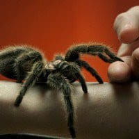 Best Insectariums and Reptile Houses