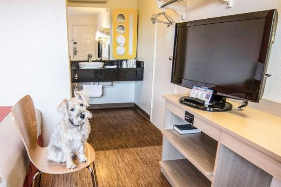 7 great hotel chains for pet friendly travel trekaroo. Black Bedroom Furniture Sets. Home Design Ideas