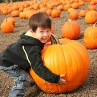 pumpkin patches and halloween fun