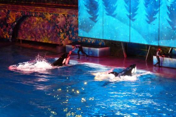 SeaWorld Christmas