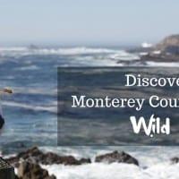 Monterey County's Wild Side