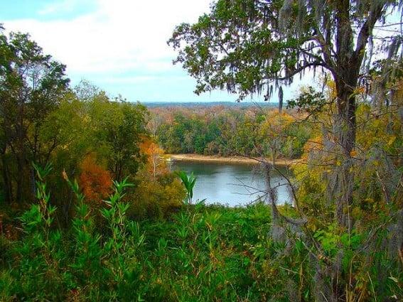 torreya-state-park-tallahassee-florida-trekaroo