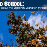 learn about monarch migration through travel